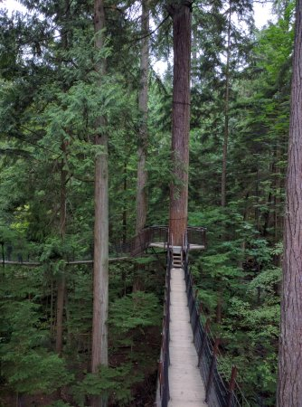 North Vancouver, Canada: Tree house