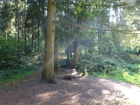 Vareler Wald