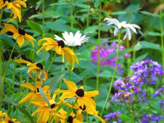 Garland's Oak Creek Lodge: Flowers in the lawn