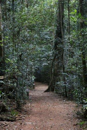 Maleny, Australia: Mary Cairncross Scenic Reserve