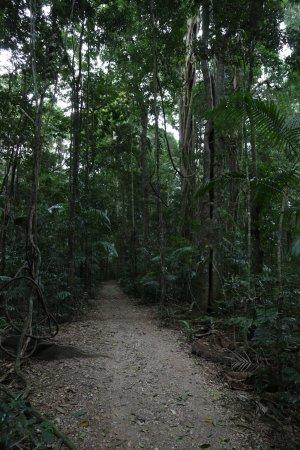 Maleny, أستراليا: Mary Cairncross Scenic Reserve