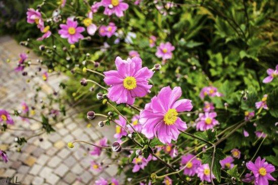 Val Venosta, Itália: Fiori nei giardini di Castel Trauttmansdorff