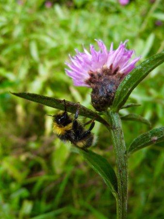 Lamlash, UK: Bee brolly