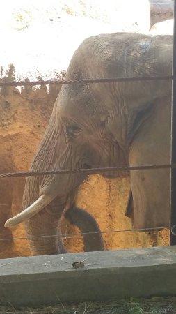 Riverbanks Zoo and Botanical Garden: 20160918_143800_large.jpg