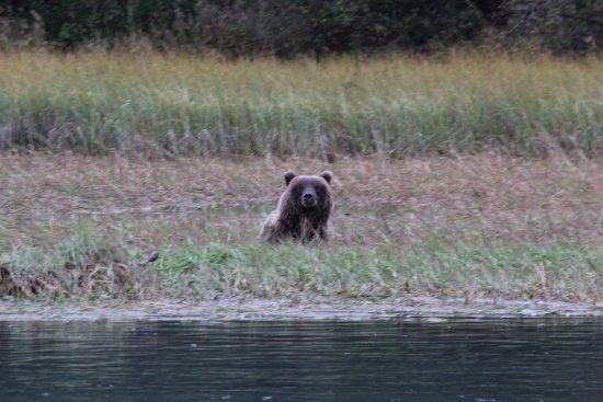Soldotna, Аляска: Bear!