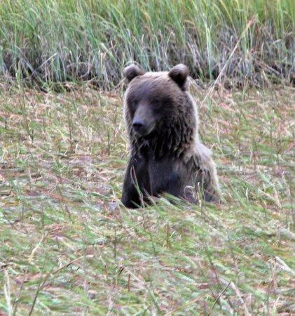 Soldotna, AK: Where are the salmon?