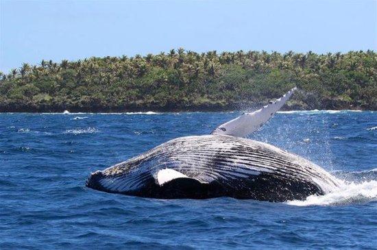 Fafa Island, Tonga: photo8.jpg