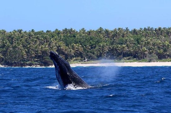 Fafa Island, Tonga: photo9.jpg