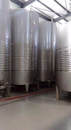 Celorico de Basto, Portugal: Cubas de vino