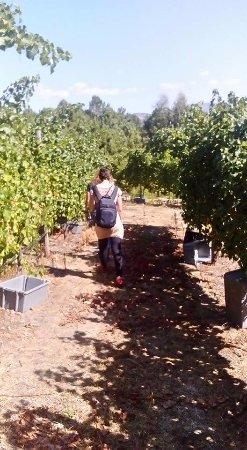 Celorico de Basto, Portugal: Paseo por las viñas