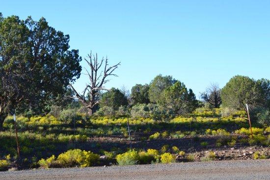 Paulden, AZ: On the Ranch