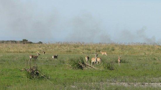 General Lavalle, Argentina: Vista desde el mirador y venados de las pampas
