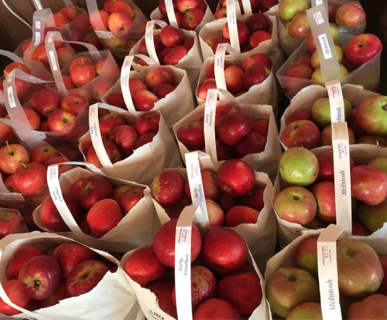 Marblehead, OH: Bergman Orchards