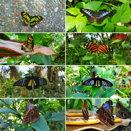 Butterfly Rainforest: IMG_20160919_164829_large.jpg