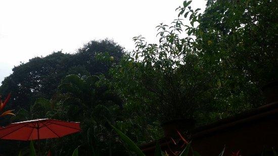 Hotel Playa Espadilla: 20160918_085437_large.jpg