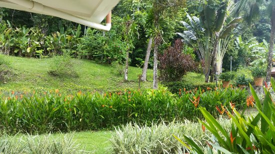 Hotel Playa Espadilla: 20160918_085454_large.jpg