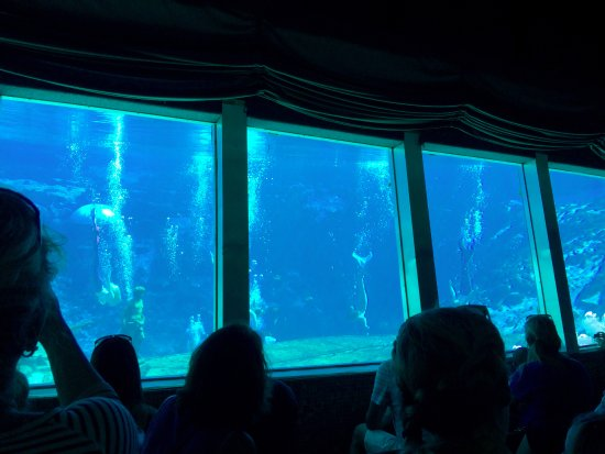 Homosassa Springs underwater exhibit