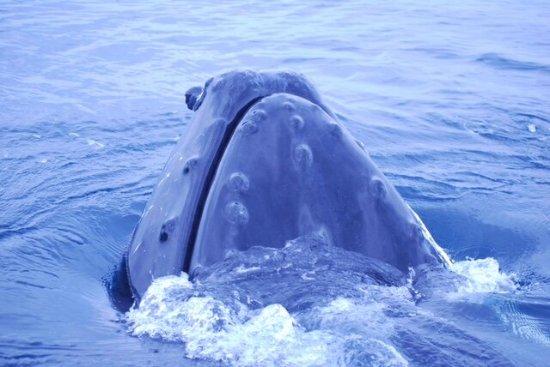 Trinity, แคนาดา: whale1_large.jpg