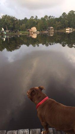 Woodville, Teksas: cedar cabin dog friendly