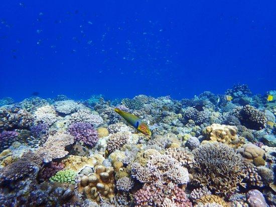 Dive 7 Seas Okinawa