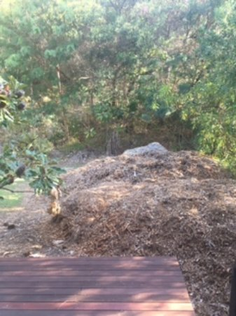 Domain Stradbroke Resort: Mulch mountain :(