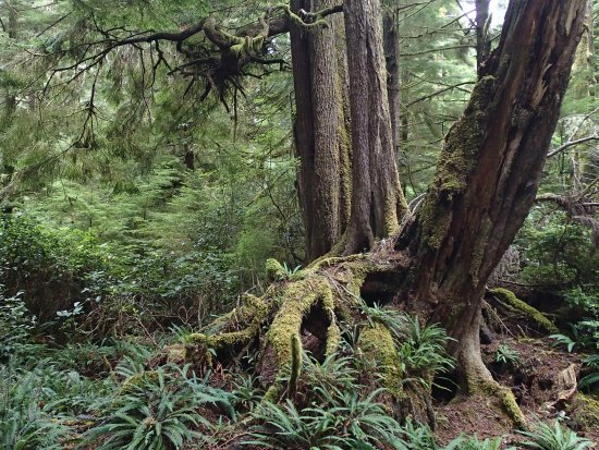 Nanaimo, Canadá: Islands covered with old growth forests.