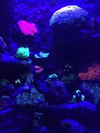 Aquarium des Lagons Nouvelle Caledonie: glow in the dark coral