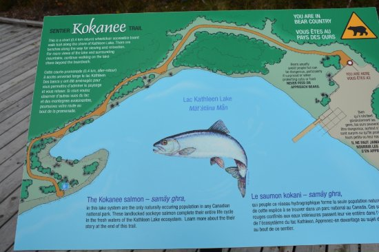 Kokanee Trail Picture of Kathleen Lake Haines Junction TripAdvisor
