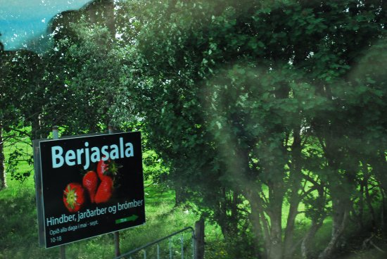 Mosfellsbaer, Islandia: Tomatoes and other vegetables grown in Hothouses from thermal heat