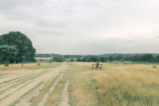 Richmond-upon-Thames, UK: photo0.jpg