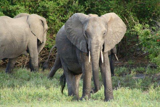 Morogoro, Tanzania: Great adventure.