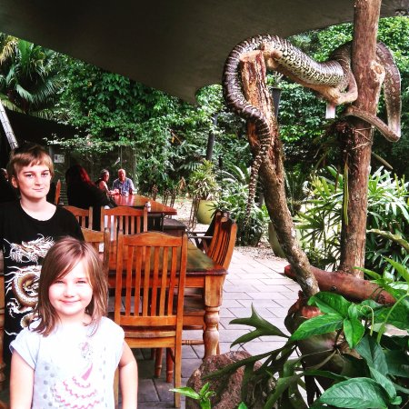 Diwan, Australia: Free roaming pythons in cafe/bistro area