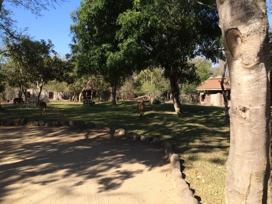 Idube Private Game Reserve Lodge