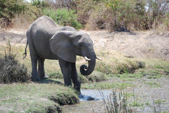 Dongwe Club: safari