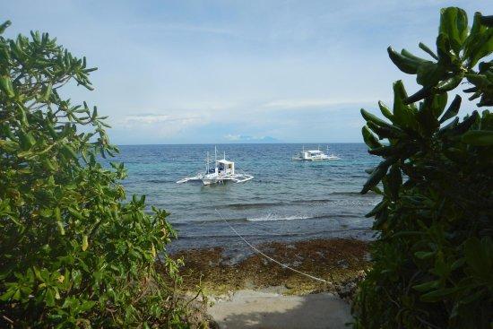 Magic oceans dive resort updated 2017 specialty resort reviews price comparison anda bohol - Magic oceans dive resort ...