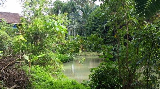 Phanom Bencha Mountain Resort: view