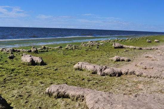 Saulkrasti, Letonia: Вид на море около кафе....