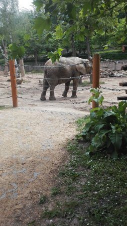 Zlin, Çek Cumhuriyeti: sloní výběh