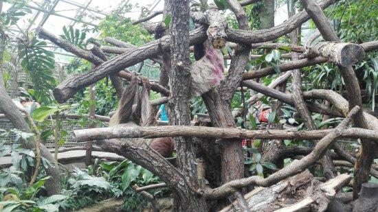 Zlin, Tsjechië: pavilon Amazonie