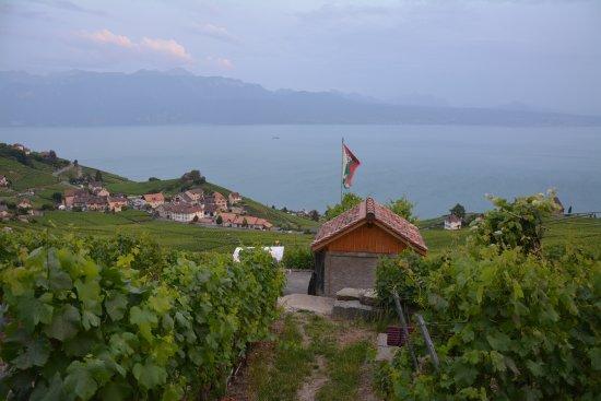 Lutry, Ελβετία: Dégustation dans les vignes
