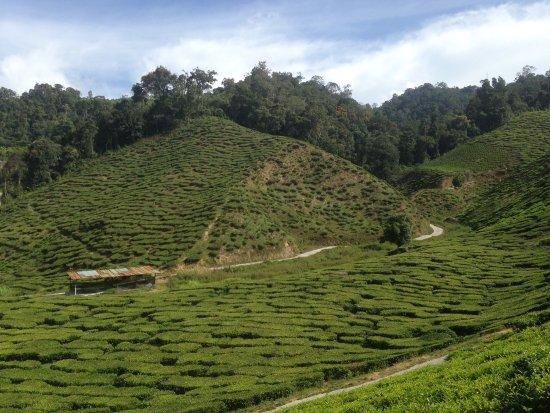 Tanah Rata, Malaysia: photo2.jpg