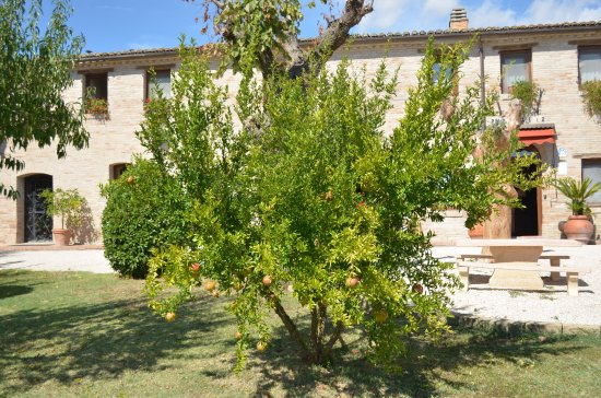 Villa Palombara Country House: giardino