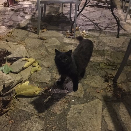 Roujan, Prancis: A friendly cat in the seating area outside
