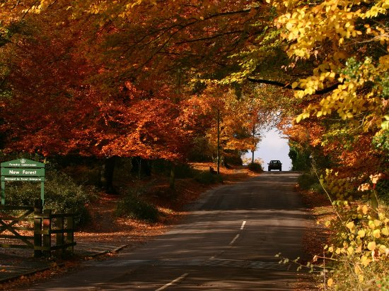 The New Forest in the Autumn