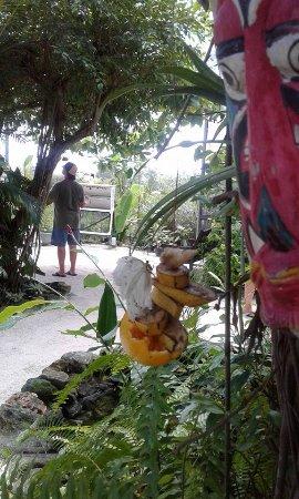 Quartier D'Orleans, Saint-Martin / Sint Maarten: Butterfly chillin :)