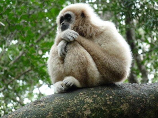Monkeyland Primate Sanctuary: Wisdom