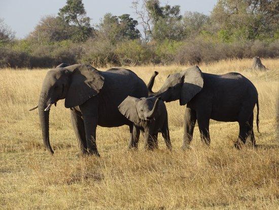 Okavango Delta: Expect amazing encounters with elephants