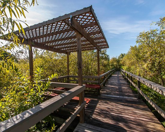 Eustis, FL: Boardwalk to Trout Lake