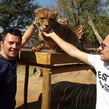 Johanesburgo, Sudáfrica: Lion & Safari Park - Cheetah interaction