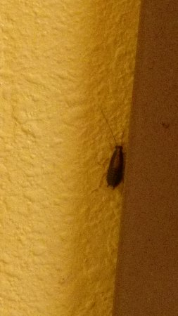 Pronghorn Inn & Suites: Roach behind bathroom door